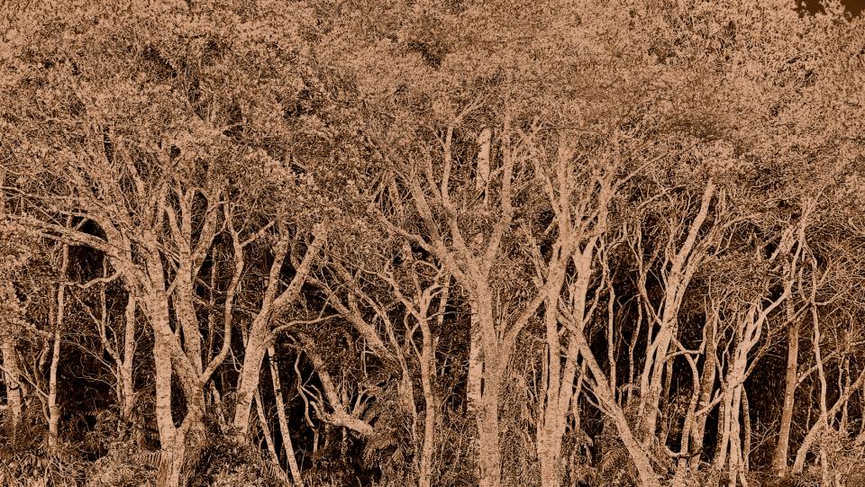 Yann-Deshoulieres-The-rain-forest-Photography-Diasec-2-sur-7