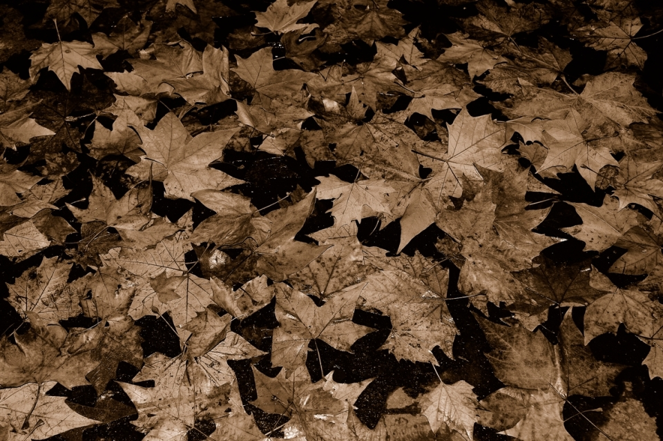 Yann Deshoulieres - autumn leaves