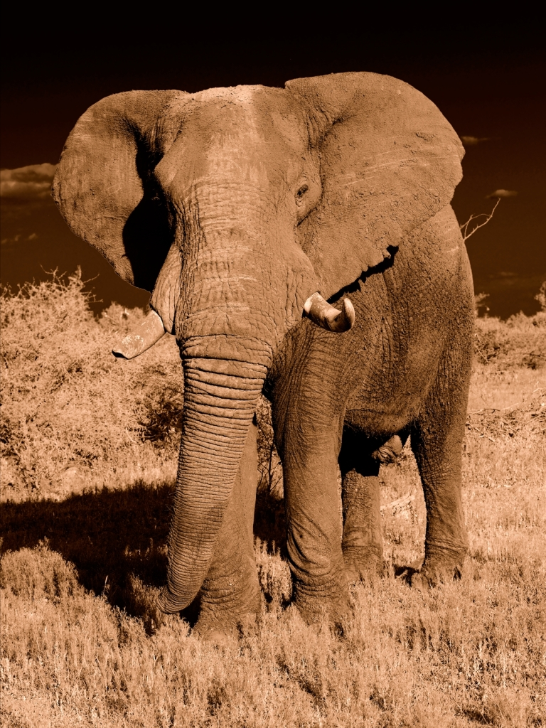 Yann Deshoulieres - Elephant