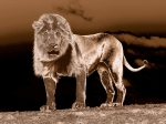 Yann Deshoulieres - Le roi lion